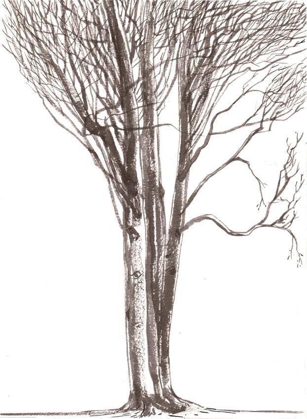 Porozmawiajmy o drzewach 21