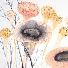 Łąka ciekawostek